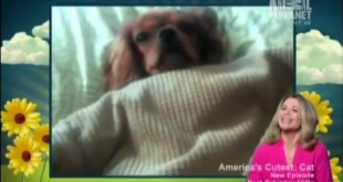 gingeronamericascutest 310x165 - Animal Planet, America's Cutest Pets, Season 5
